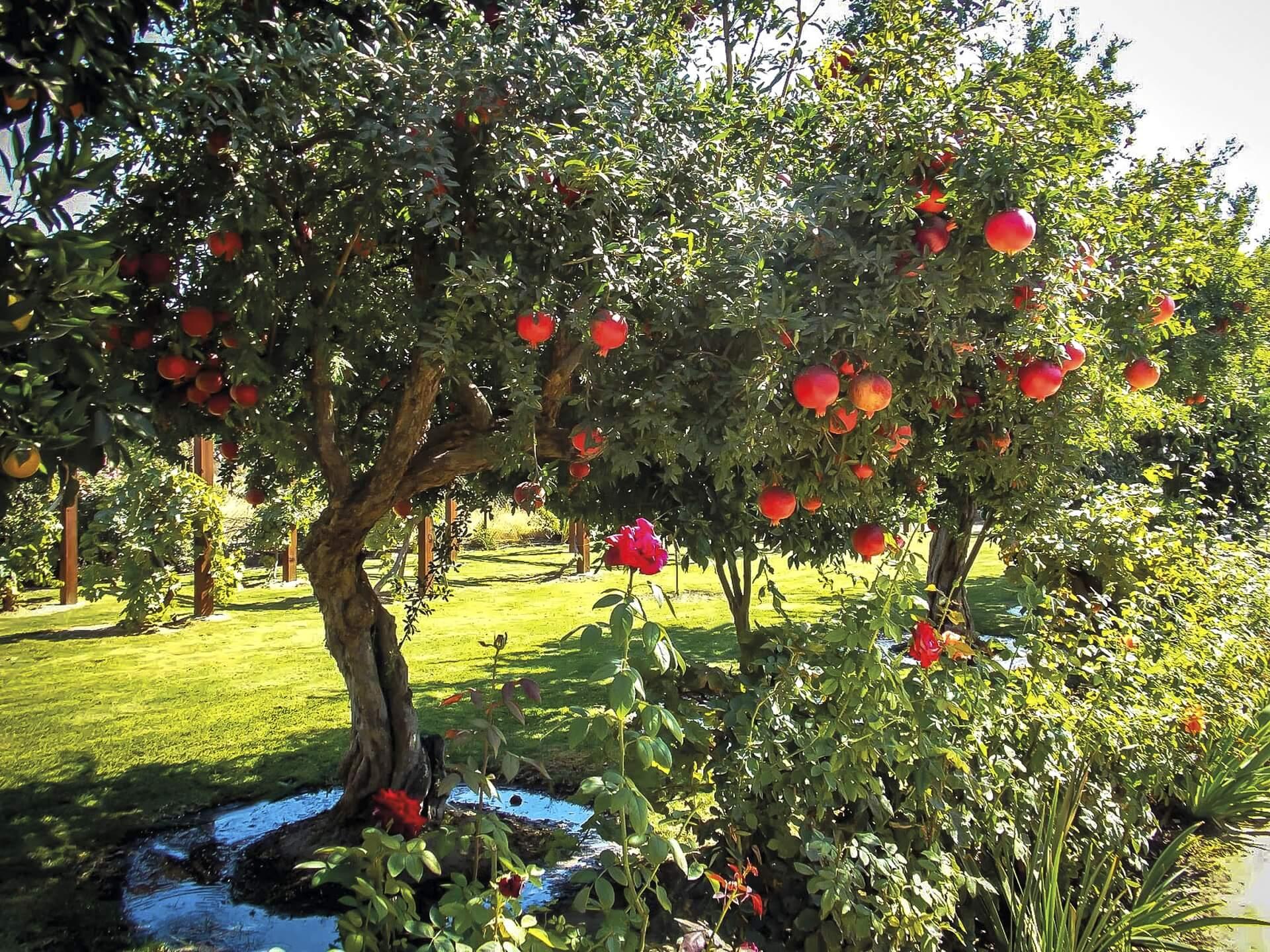 Озелененная территория с плодовыми деревьями